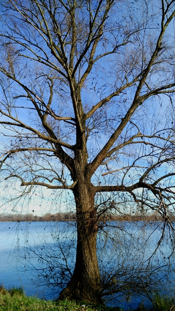 albero autunnale vicino all'acqua a Mantova