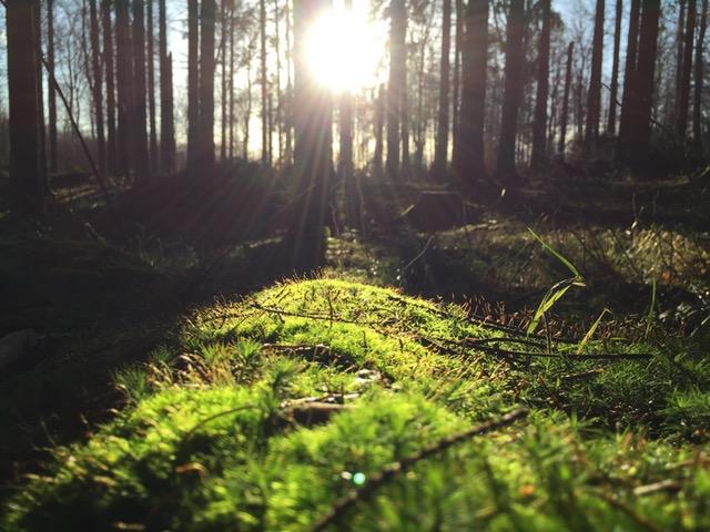 la quiete di un'alba nel bosco