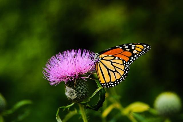 primavera fiore con farfalla
