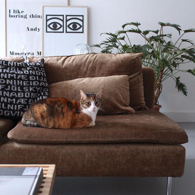 moderno divano in velluto marrone